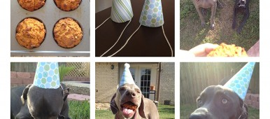 dog birthday party